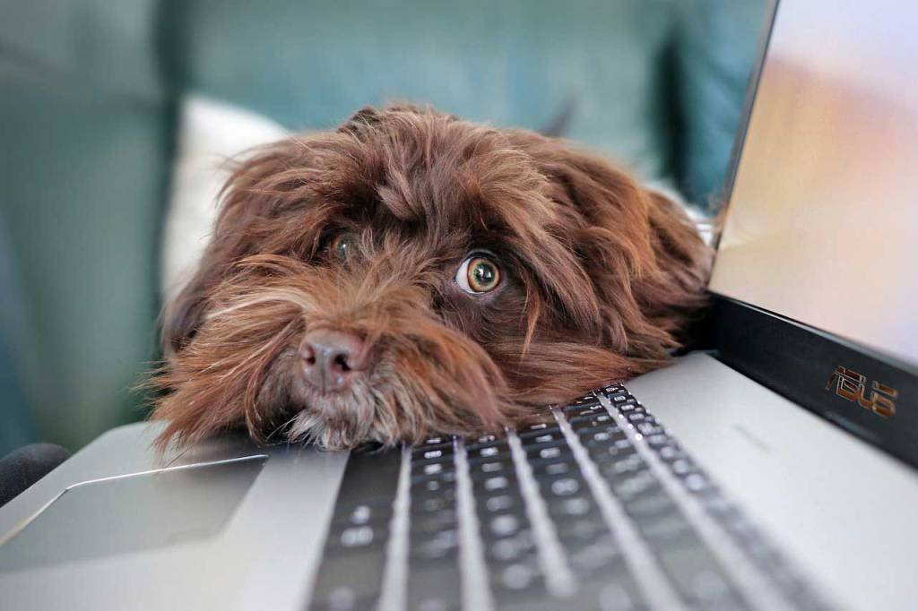Un gos al costat d'un ordinador dins d'una llar.